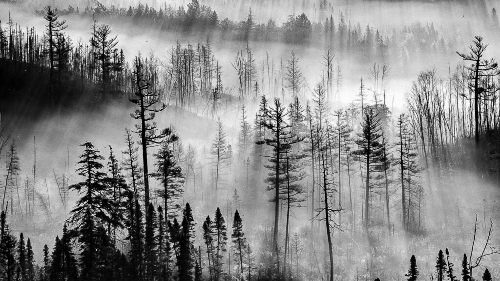 Foggy forest in Bear Country, New Foundland